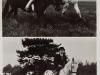 bea-op-paard-83
