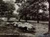 schapen-50-08-06-1963