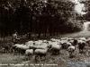 schapen-52-21-08-1961