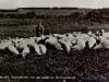 schapen-53-14-07-1965